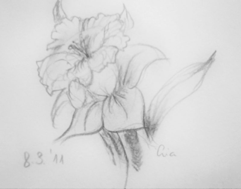 Daffodil Pencil on paper Narcis
